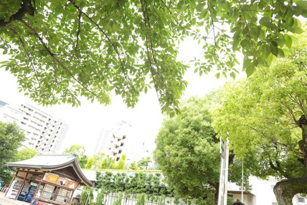 大阪天満宮の新緑
