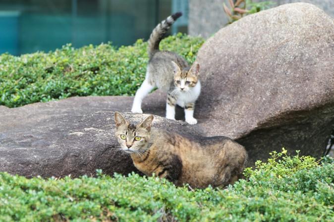天神橋筋商店街の猫の写真