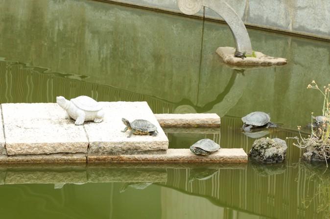 大阪天満宮の亀