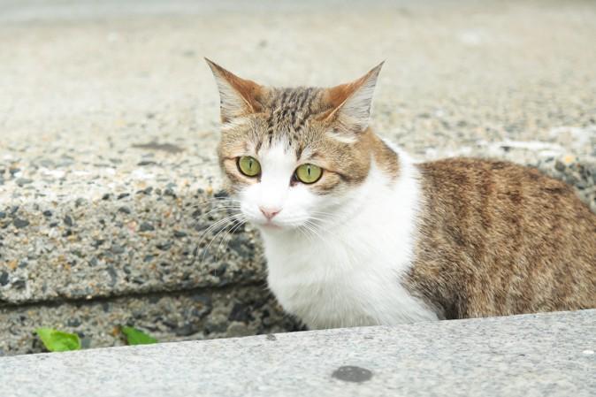 大阪天満宮の猫