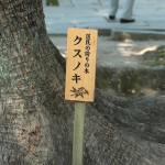 fujinomori_g45
