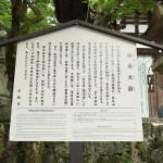 matsunootaisha_g10